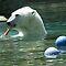 Arctic/Antarctic Animals