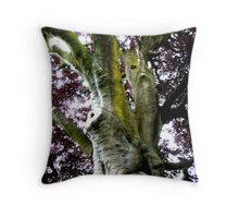 Looking up the Elephant Tree (Copper Beech) Throw Pillow