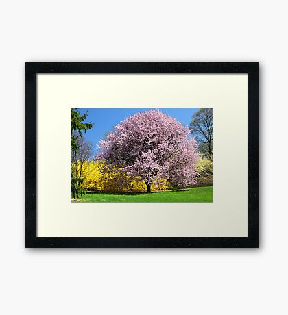 Blooming Trees Framed Print