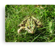 Frogs are green, are you?  Canvas Print