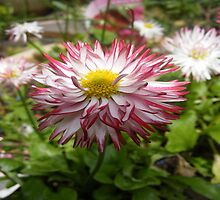 beauty of a flower by katie lodder