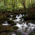 Creeks 2009 by Lindsay Knowles