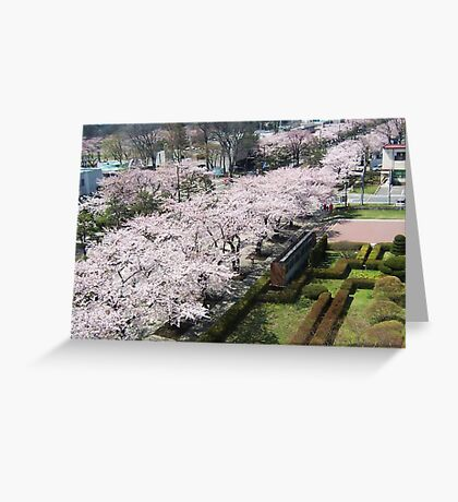 trees in bloom  Greeting Card