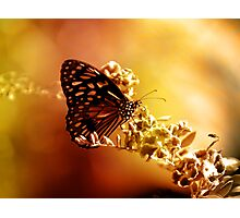 Radiance Photographic Print