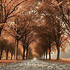 Copper Lane by LarsvandeGoor