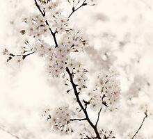 Cherry blossom artistic closeup sepia toned art photo print by ArtNudePhotos