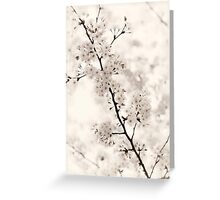 Cherry blossom artistic closeup sepia toned art photo print Greeting Card