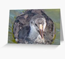 A Coot Chick Greeting Card