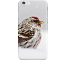 Snowy Common Redpoll iPhone Case/Skin
