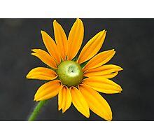 Beauty Of Orange Photographic Print