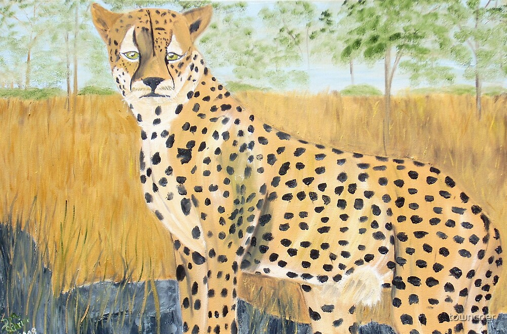 Cheetah View From A Rock  by towncrier