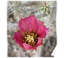 Lovely Red Cactus Flower Poster