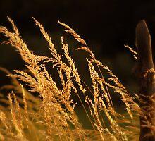 Grass Growing Along Fenceline by Ryan Houston