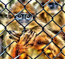 Prisoner? by duroo