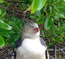 Yellow-Eyed Penguin by Serendipity2lip