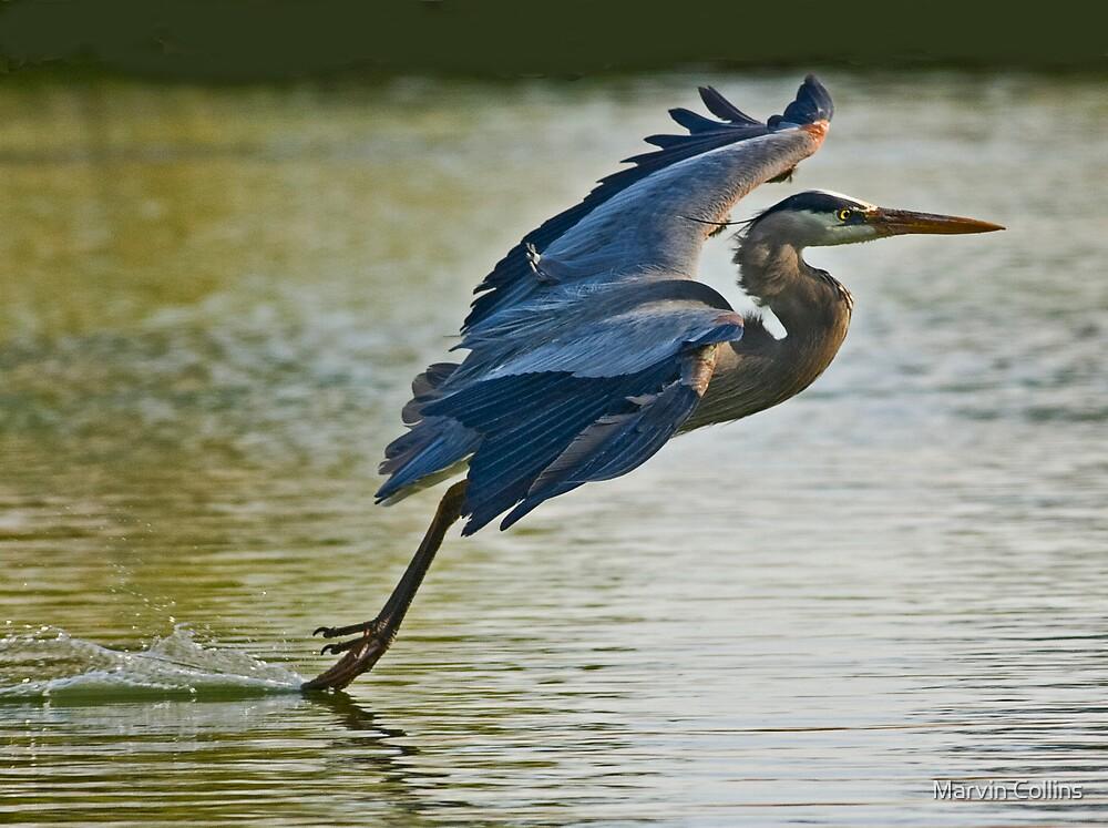 Heron Landing by Marvin Collins