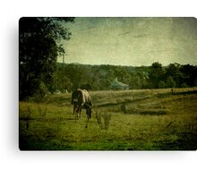 Grazing - Uralla, Northern Tablelands, NSW, Australia Canvas Print