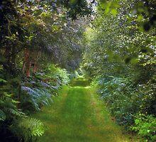 Green Lush English Avenue by yeamanphoto