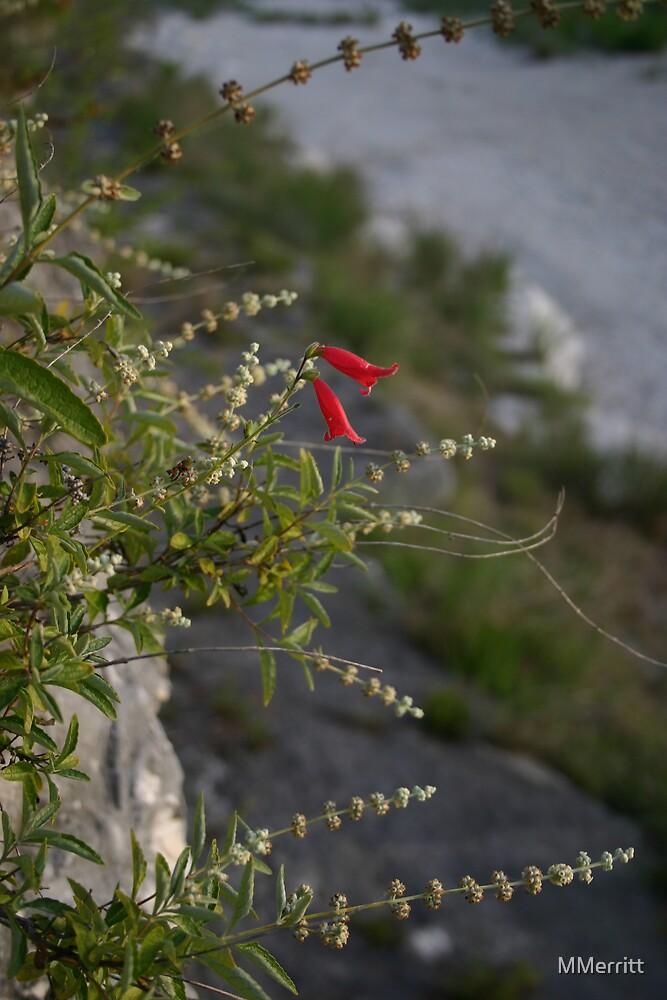Cliffedge Flowers by MMerritt