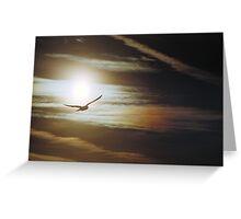Lake Manawa Seagull Greeting Card