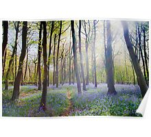 Blue Bells in the Wood Poster