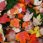 Autumn Leaves by Ray4cam