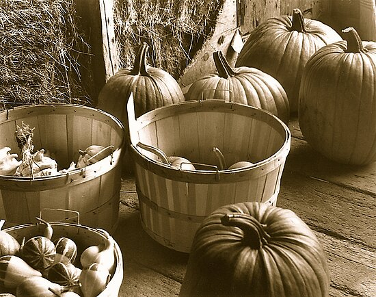 Pumpkins by Ray4cam