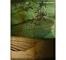 Rusted Wing Photographic Print