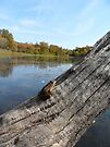 Frog on a log enjoying the peaceful landscape!  by Barberelli