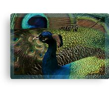 Reading the Book of Feathers Canvas Print