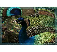 Reading the Book of Feathers Photographic Print
