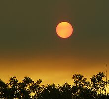 Bushfire sun by Tammy Serdiuk