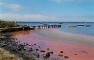 the day the red algae came to the bay by aglaia b