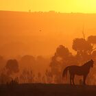 Paarl Horse at Sunset 2 by id4jd