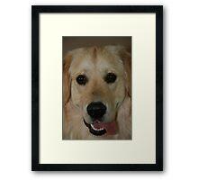 What a daft dog! Framed Print