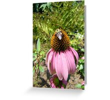 echinacea cone flower and bee Greeting Card