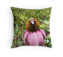 echinacea cone flower and bee Throw Pillow