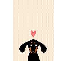 Dachshund Puppy Love Photographic Print