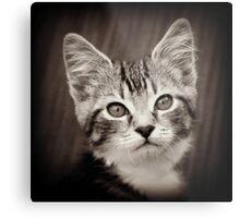 Frodo Kitten Metal Print