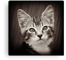 Frodo Kitten Canvas Print