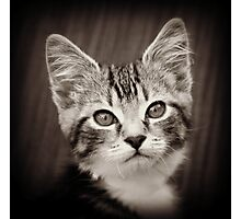Frodo Kitten Photographic Print
