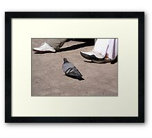 Pigeon walk Framed Print
