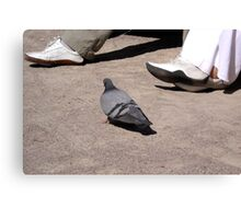 Pigeon walk Canvas Print