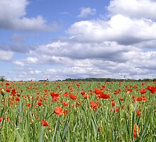 Field of poppies under cloudy sky by Kady