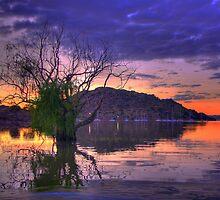 The lone Tree by Gideon van Zyl
