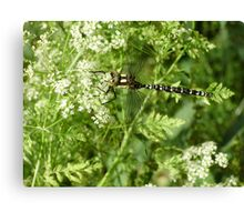 black and white dragonfly Canvas Print