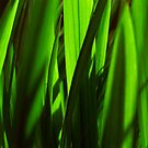 exotic grasses - green by SNAPPYDAVE