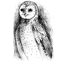 owl sketch Photographic Print