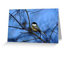 Chick-A Delight. Greeting Card