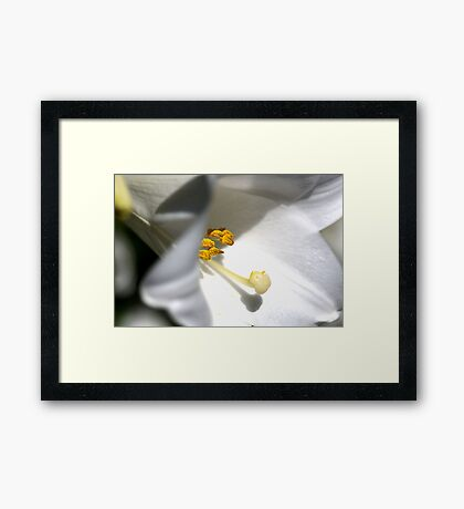 Pure as Lily Framed Print